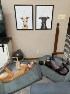 """Tator & Nora"" adopted by Cate Osterman"